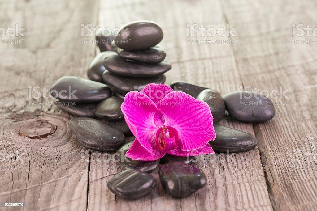 Fucsia Phalaenopsis orchid and black stones on weathered wood stock photo