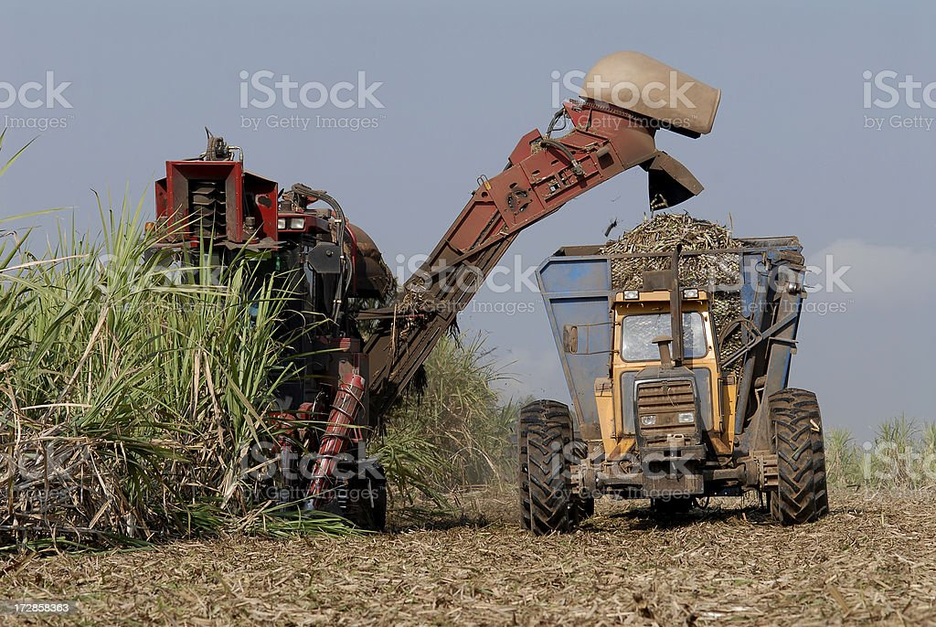 Fuel sourcing ethanol in the field stock photo