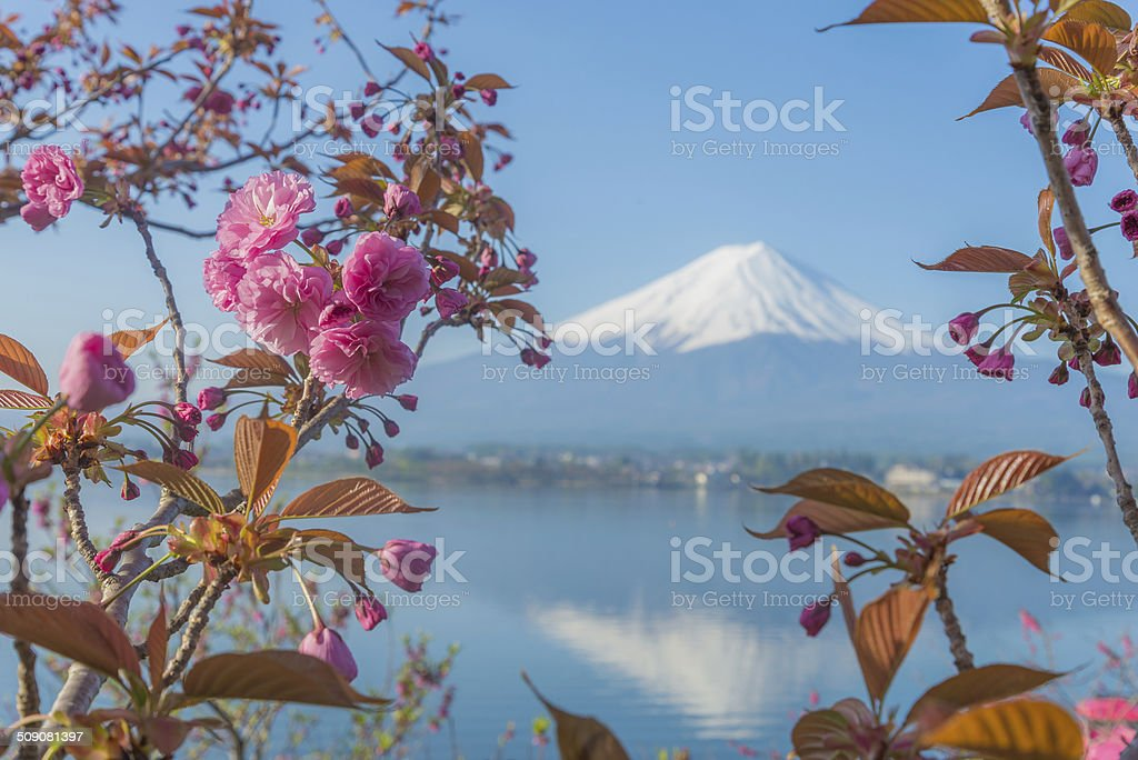 Fuji and Sakura stock photo