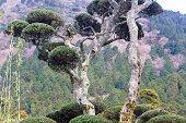 Fuji Hakone Izu National Park in Kanagawa Prefecture, Japan