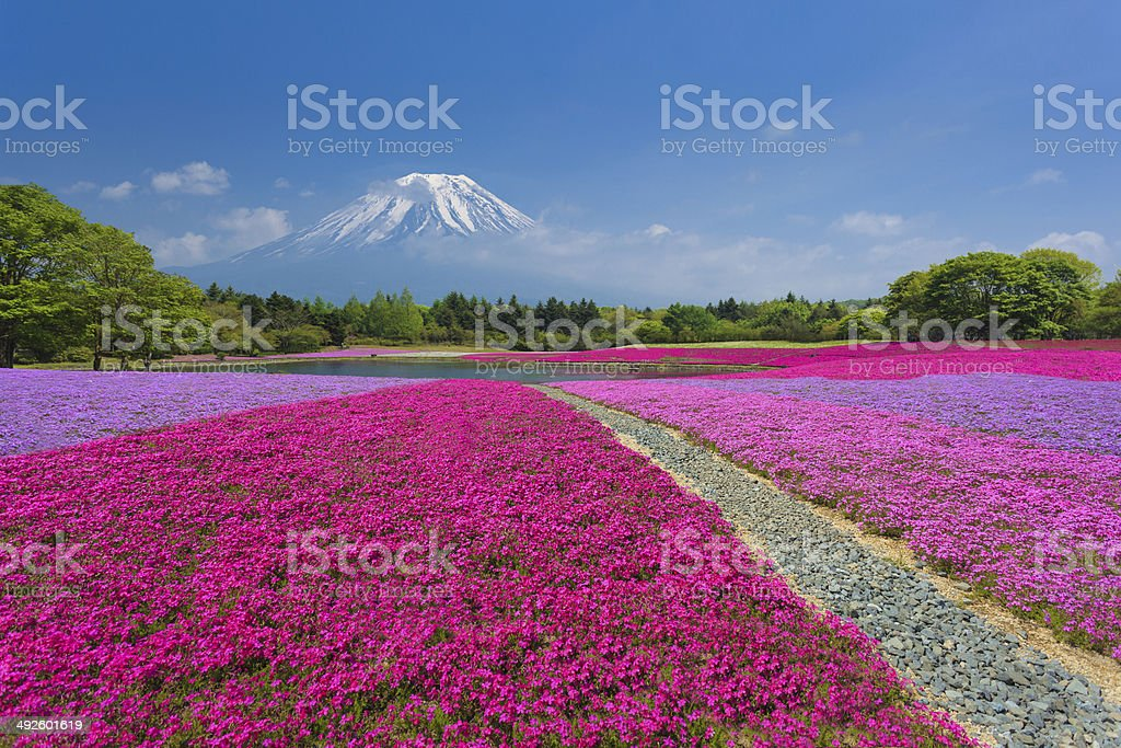 Fuji with Pink Moss stock photo