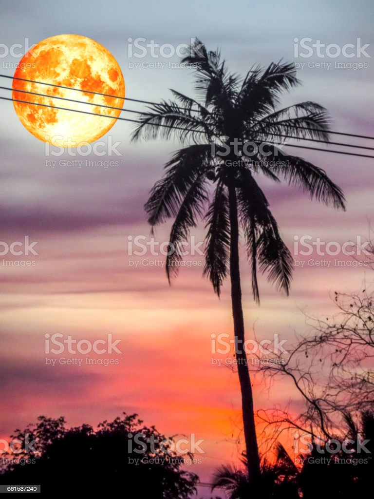 full blood moon and coconut silhouette stock photo