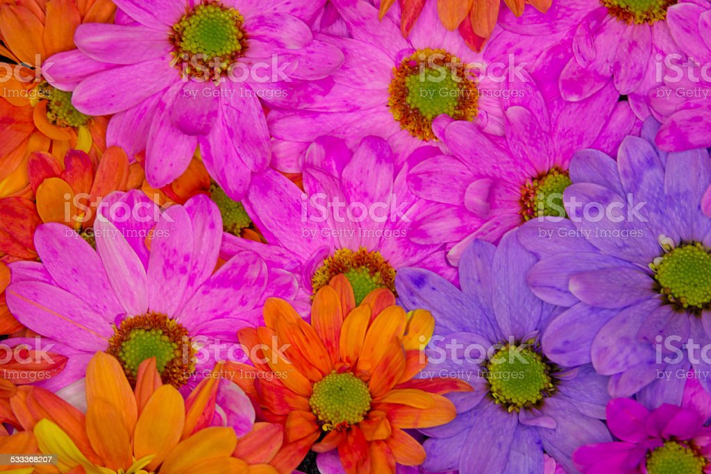 Full frame closeup of pink, orange and purple mums. stock photo