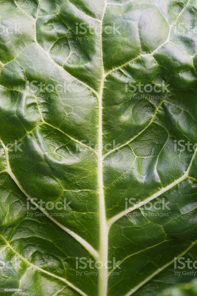 Full frame green leaf of savoy cabbage background - macro stock photo