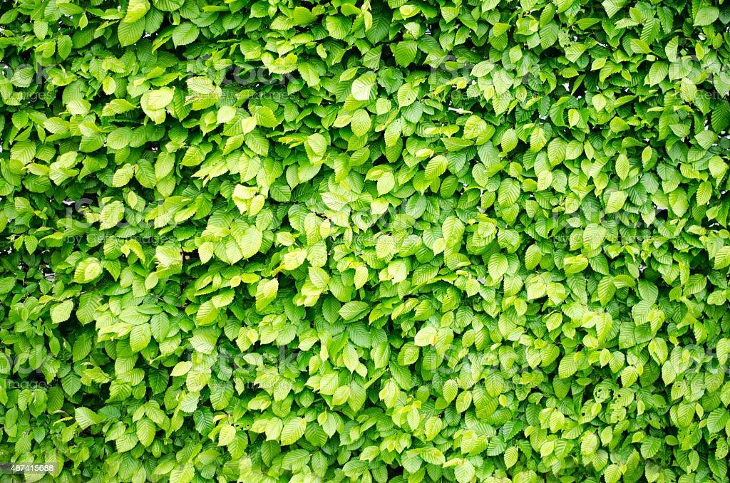 full frame leaves stock photo