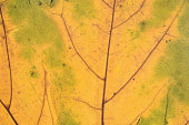 Full frame of green yellow leaf