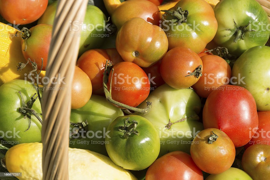 Full frame of tomatoes with basket handle. royalty-free stock photo