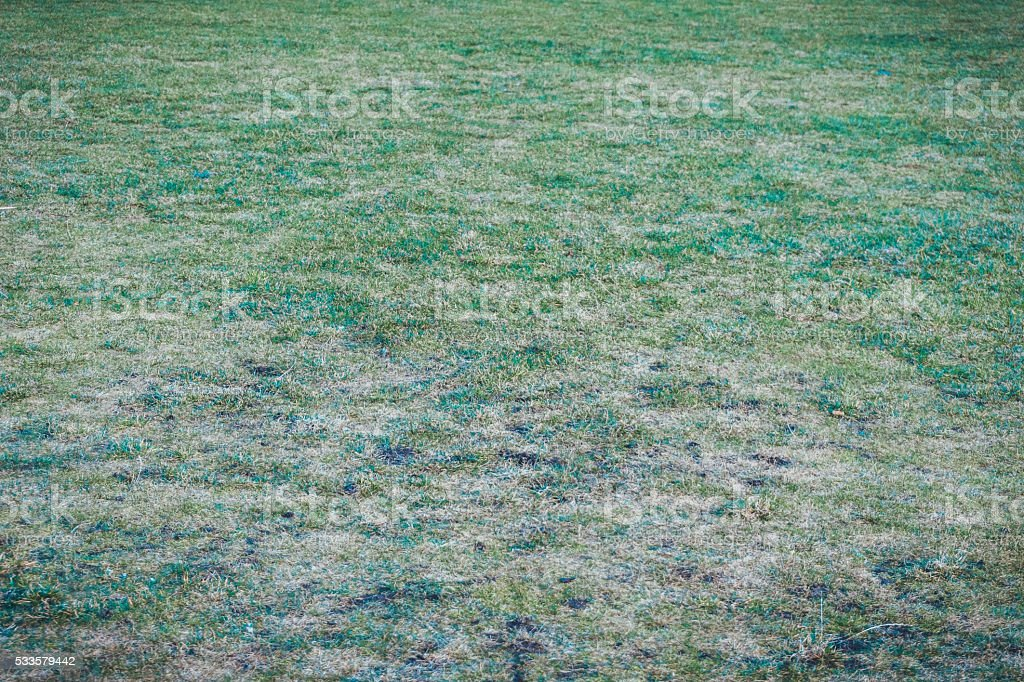 Full frame of worn out turf grass stock photo