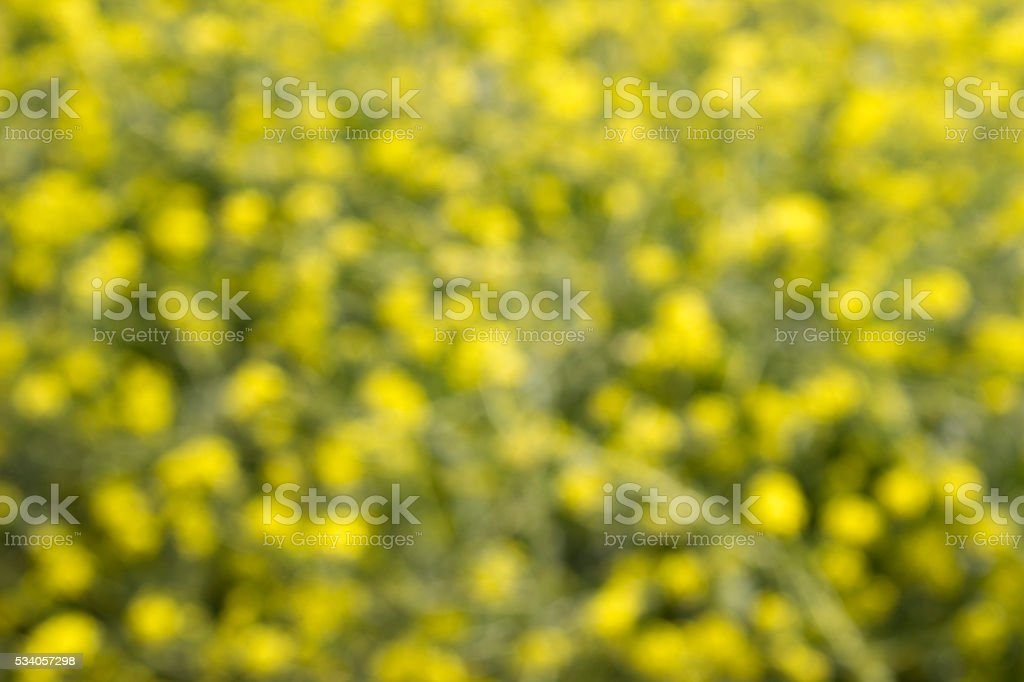 Full frame view of defocussed buttercup flowers stock photo