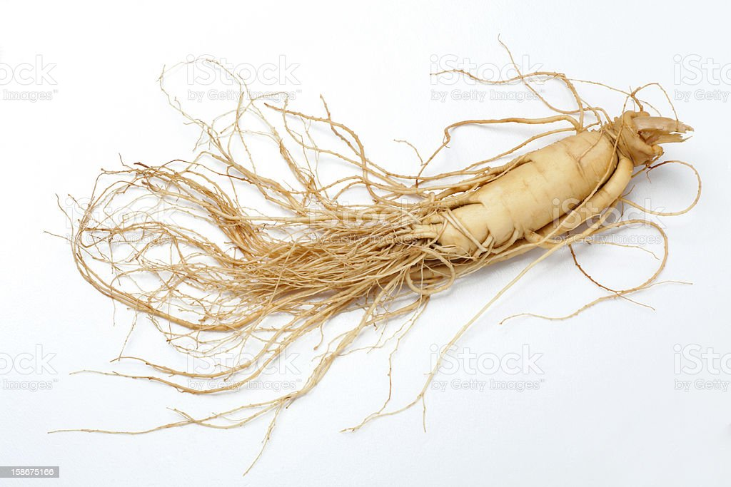 Full ginseng plant root lying on white background royalty-free stock photo