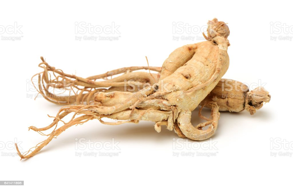 Full ginseng plant root lying on white background stock photo