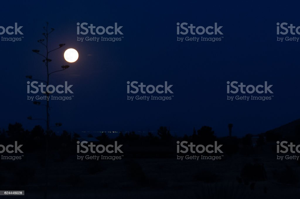 Full Moon and Agave stock photo