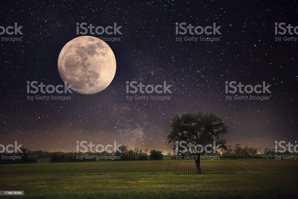 Full moon and lonely tree stock photo