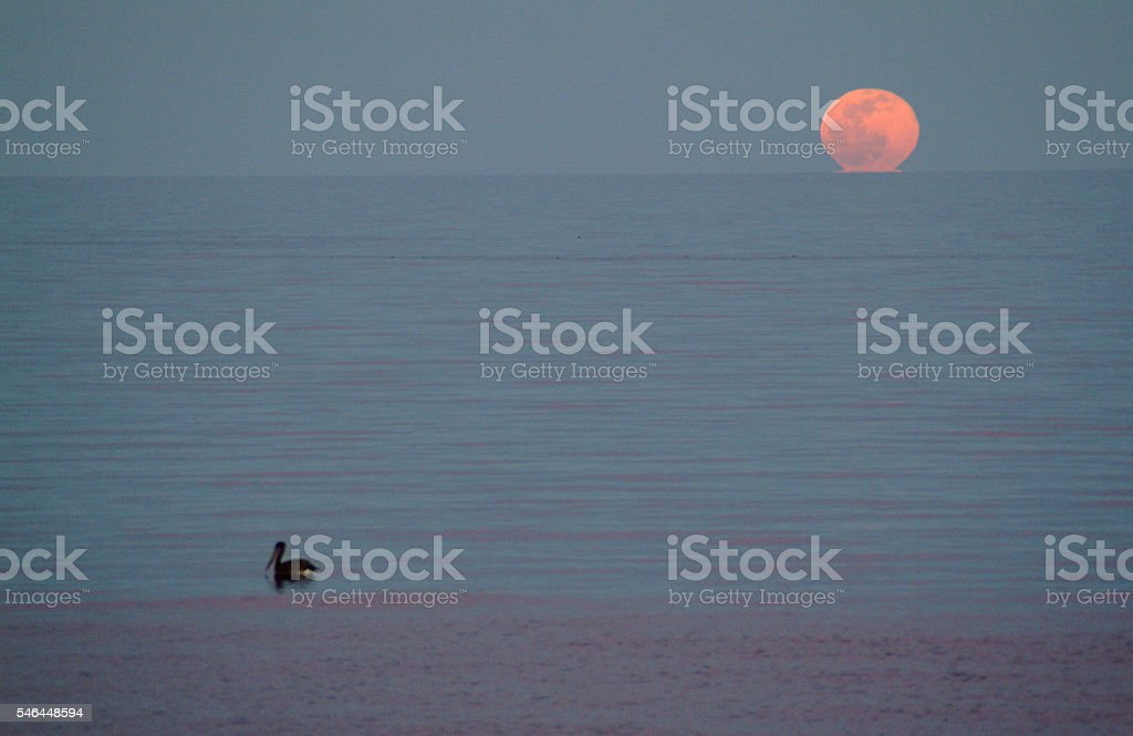Full moon and pelican stock photo