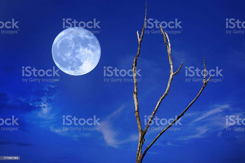 Full Moon And Tree royalty-free stock photo