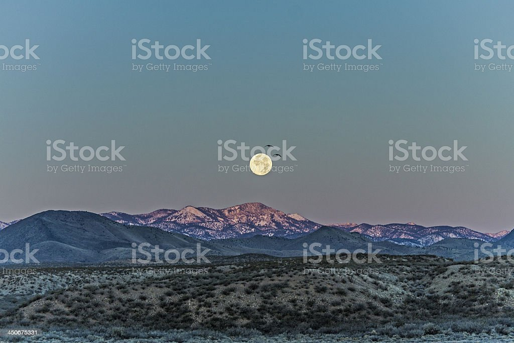 Full moon at Bosque del Apache royalty-free stock photo