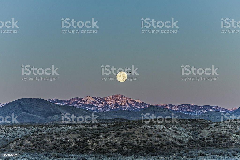Full moon at Bosque del Apache stock photo