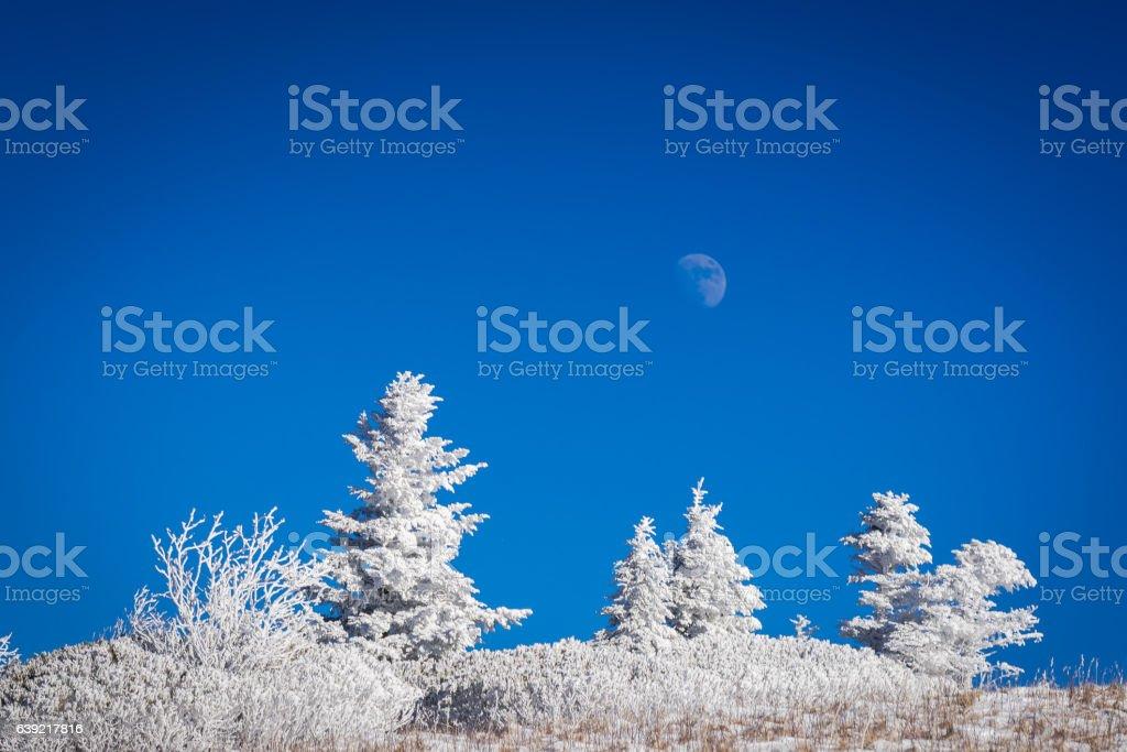 Full moon at Roan Mountain stock photo