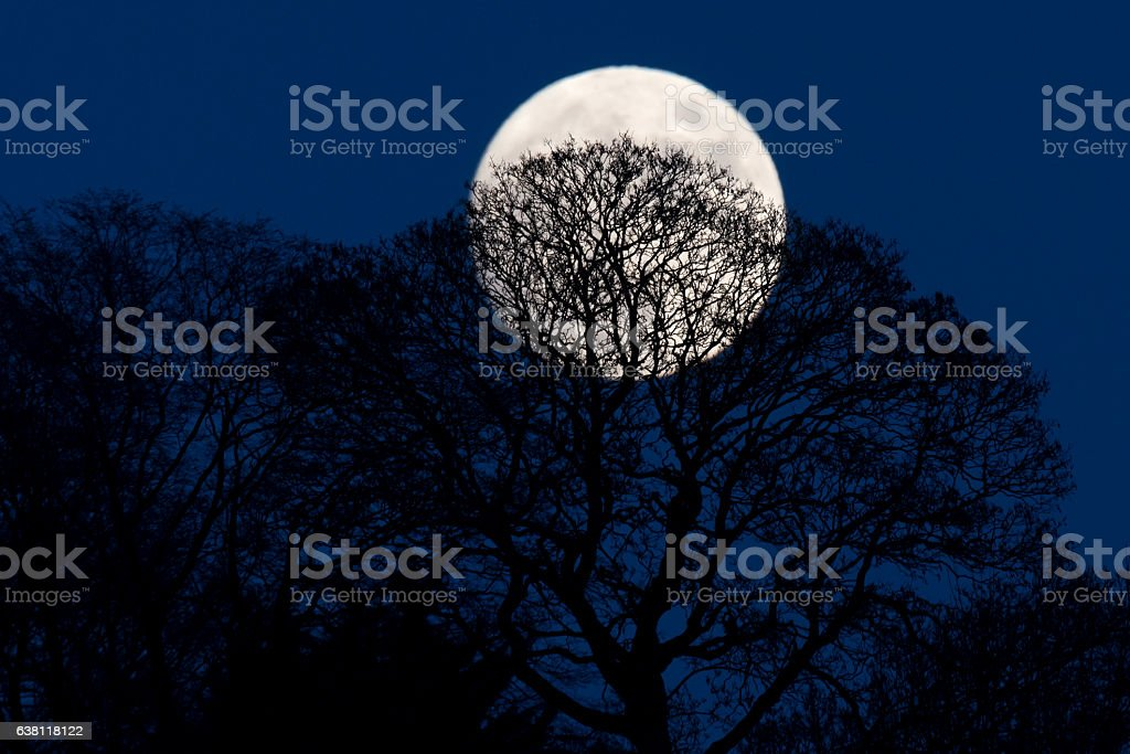 Full moon behind silhouetted trees stock photo