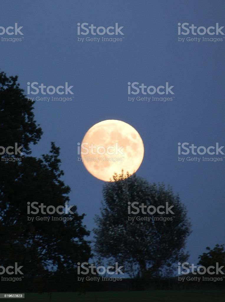 Full Moon Behind the Shadow of Trees stock photo