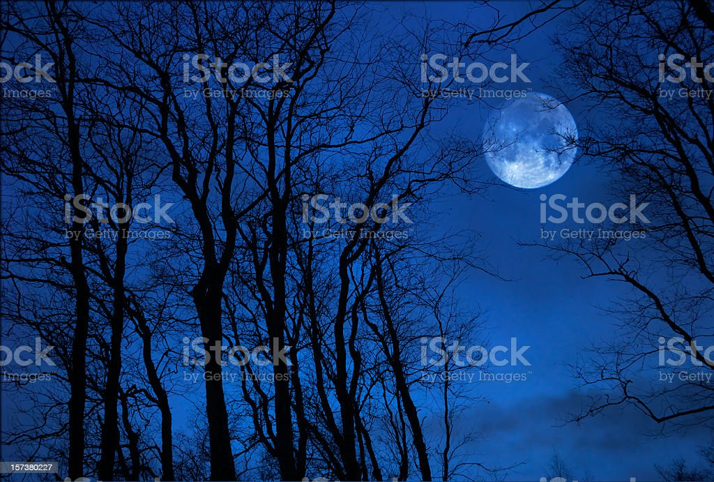 Full moon behind trees in a blue sky stock photo
