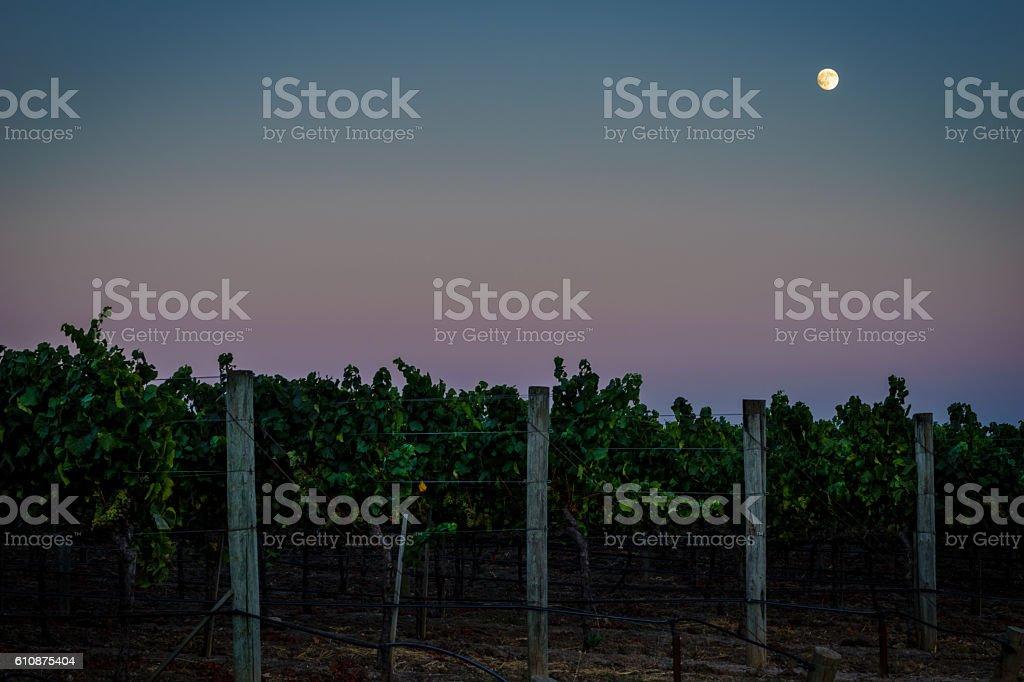 Full moon, colorful sky over Napa California vineyard at twilight stock photo