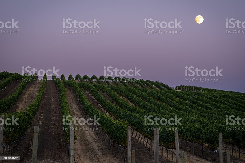 Full moon over a lush Napa vineyard at dusk stock photo
