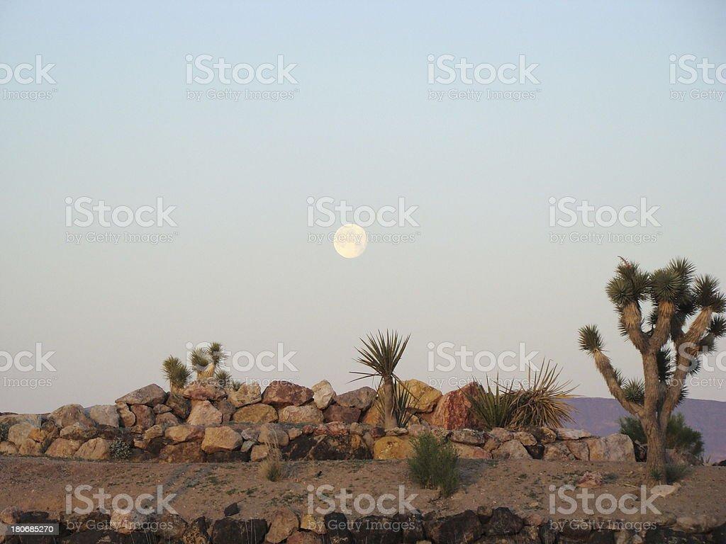 Full Moon over Desert Plants royalty-free stock photo