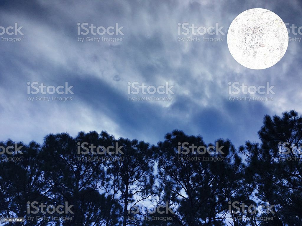 Full moon over pine forest stock photo