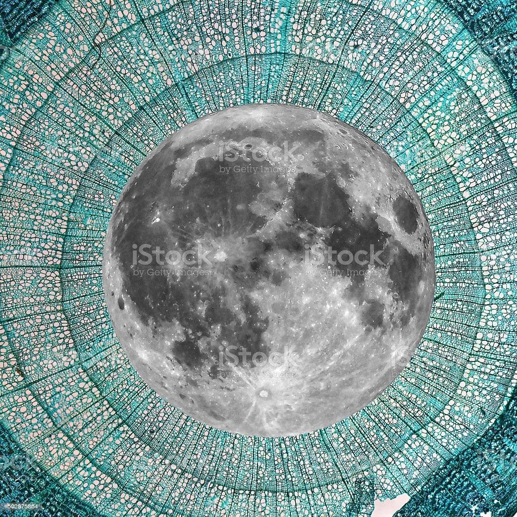 Full moon over Tilia stem micrograph stock photo