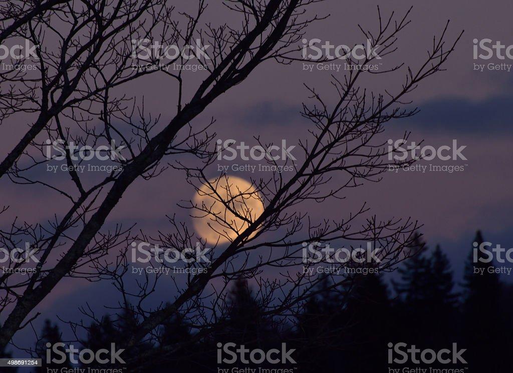 Full Moon Rising stock photo