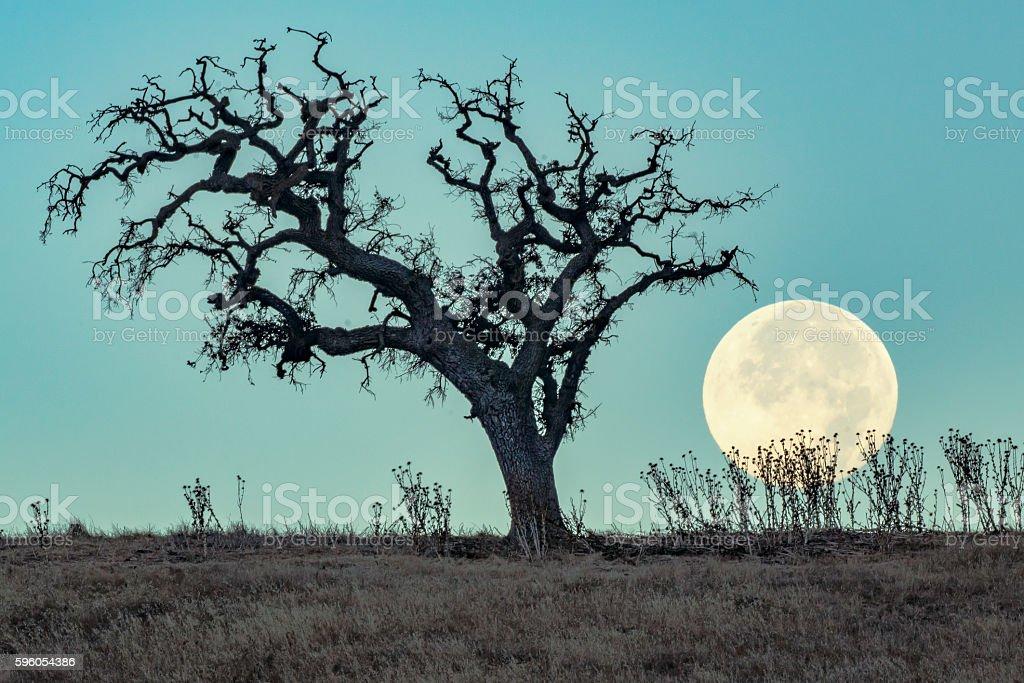 Full Moon Set stock photo