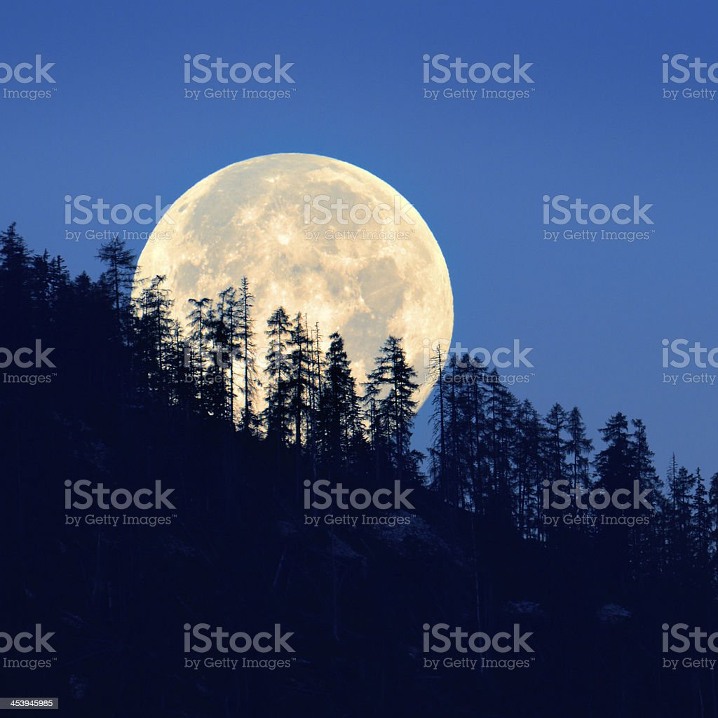 Full Moon shining through Trees stock photo