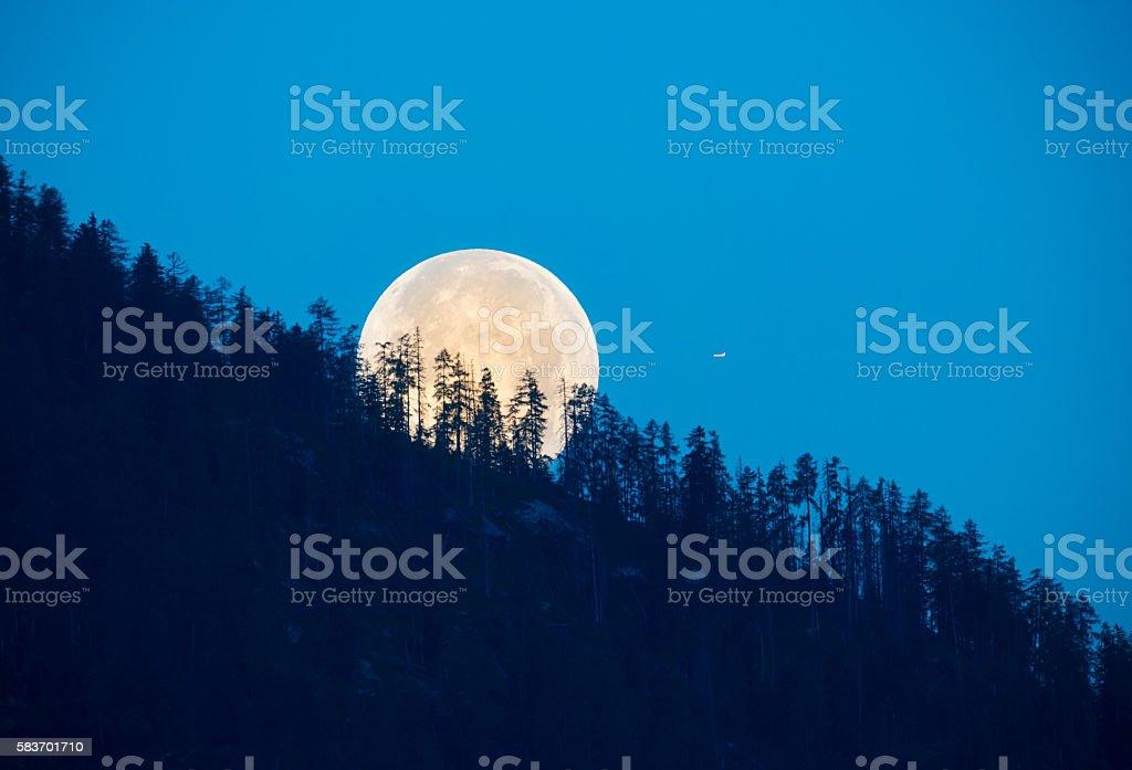 Full Moon shining through Trees stock photo