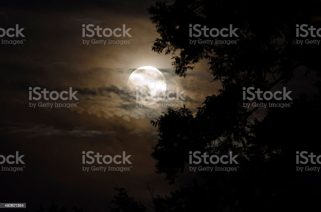 Full Moon with Silhouetted Tree stock photo