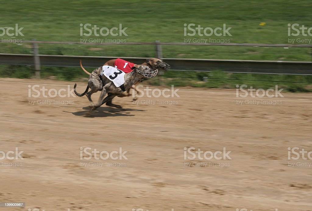 Full Speed 1 royalty-free stock photo