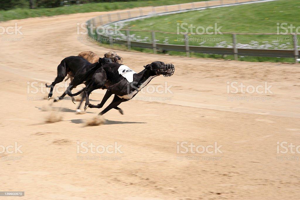 Full Speed 2 royalty-free stock photo