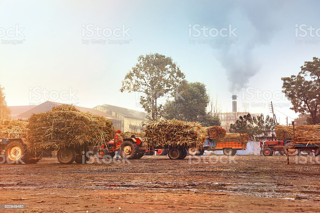 Fully Loaded Tractor Of Sugarcane (Sugarcane Mill) stock photo