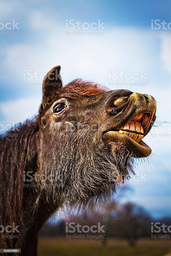 fun bored horse yawns royalty-free stock photo