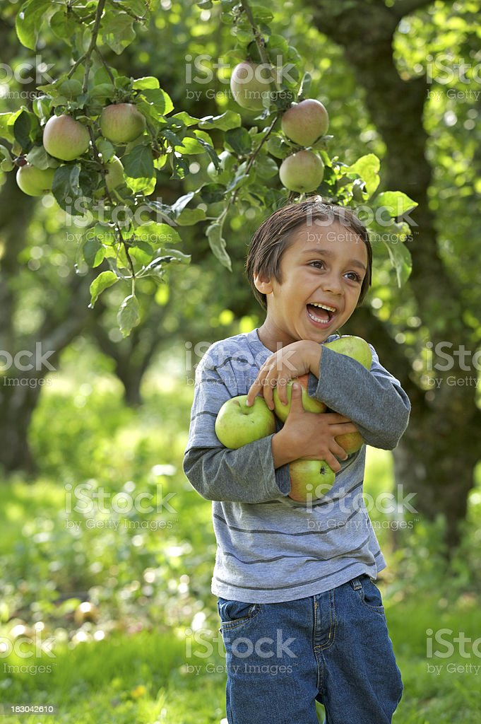 fun collecting apples royalty-free stock photo