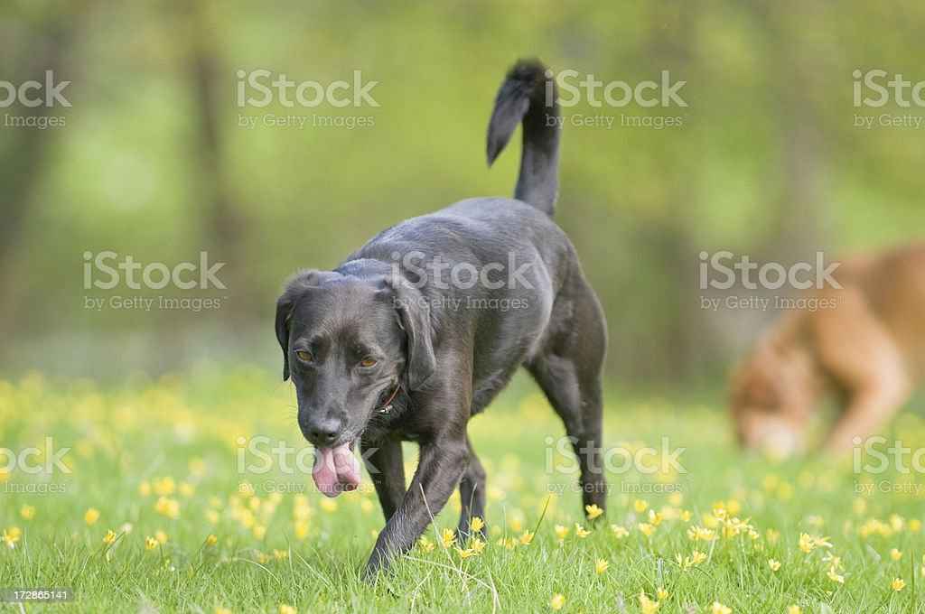 fun in the buttercups royalty-free stock photo