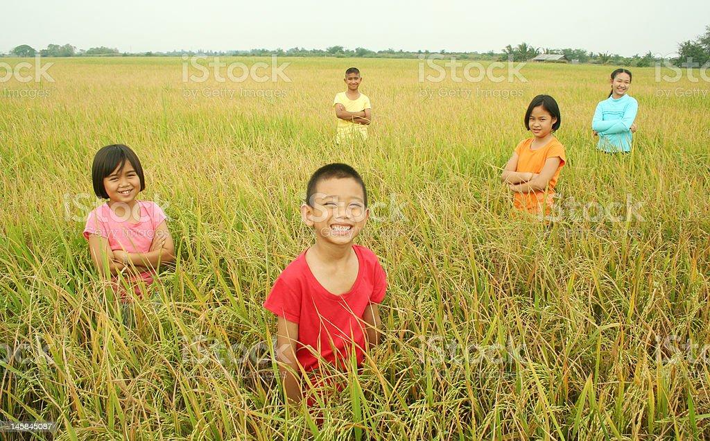 Spaß im Reisfeld. Lizenzfreies stock-foto
