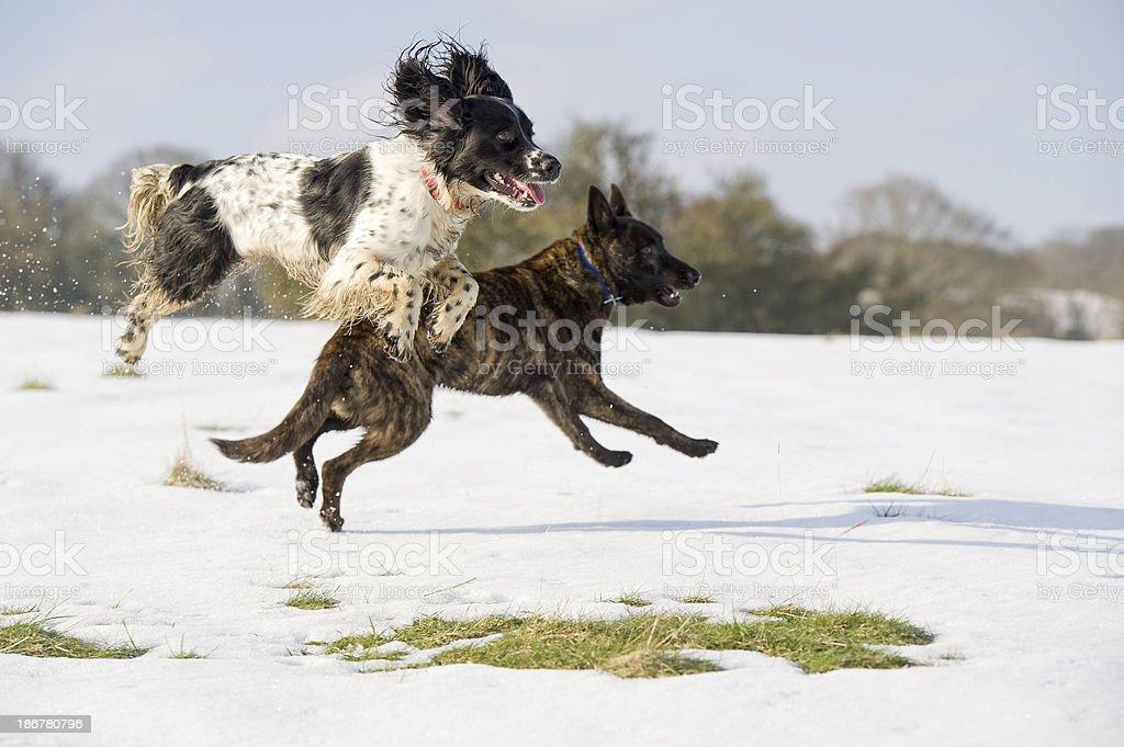 Fun in the snow stock photo