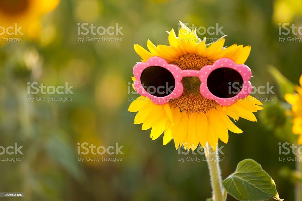 Fun sunflower with childrens sunglasses stock photo