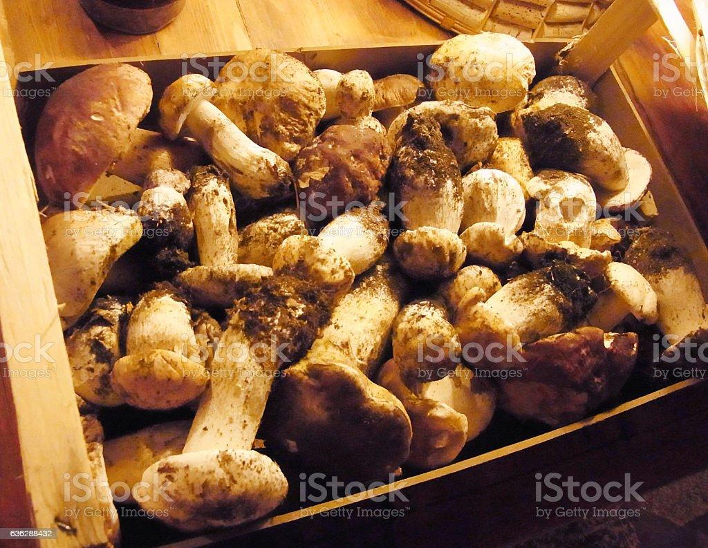 Funghi Porcini stock photo