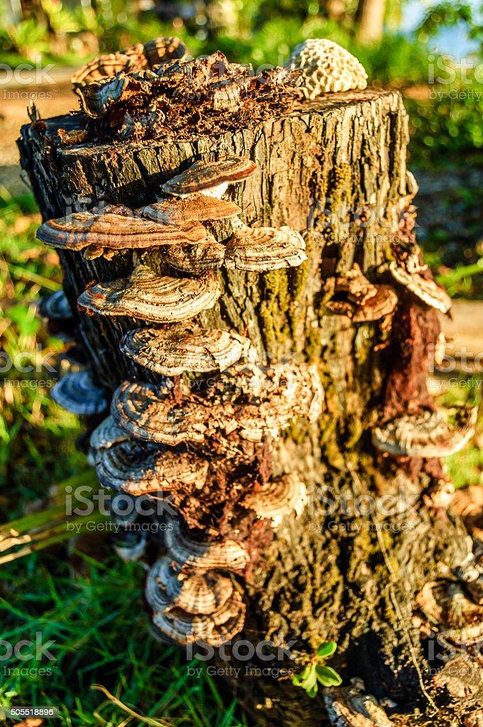 Fungi growing on a tree stump stock photo