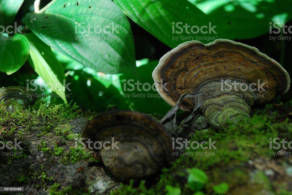 Fungi Growing on Fallen Log royalty-free stock photo