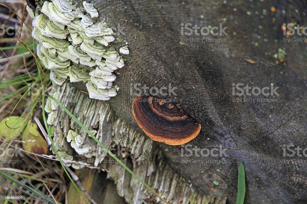 Fungi on a Tree royalty-free stock photo