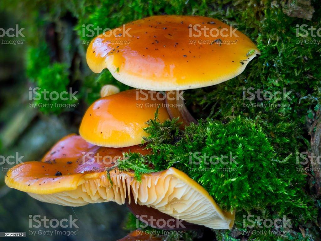 Fungi on a tree stock photo