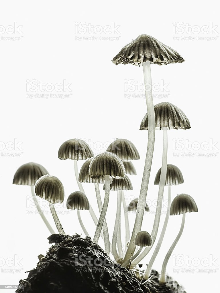 Fungi royalty-free stock photo